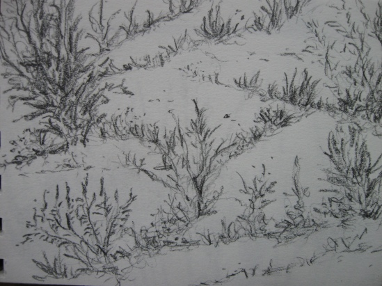 Cement Crack Weeds (pencil)