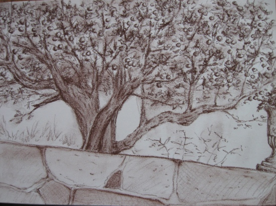 Apple Tree (conte)