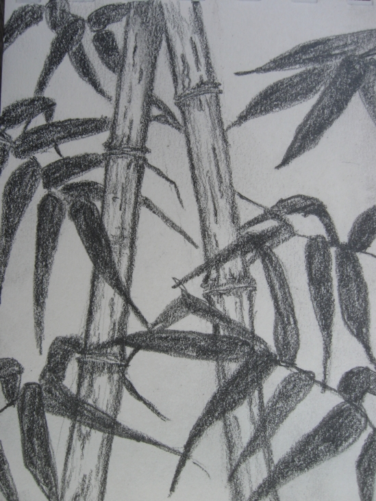 Bamboo for Tyler (pencil)