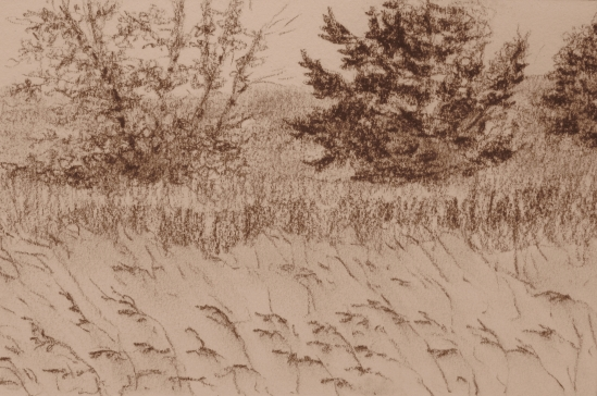 Seine Field (conte pencil, 4 x 6)