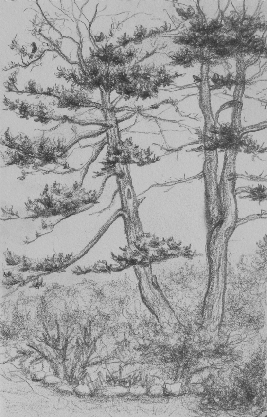 "Shapley Road Front Yard (6B pencil, 4"" x 6"")"