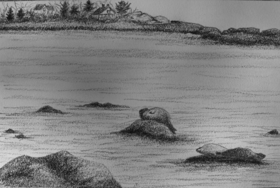 Seals at Low Tide, Brace Cove
