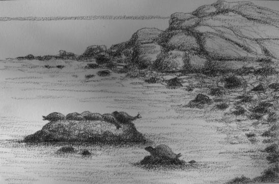 Brace Cove Seals 2